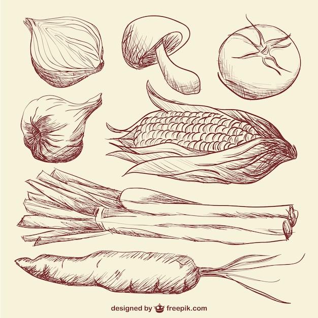 Dibujos Realistas De Varias Verduras Descargar Vectores Gratis
