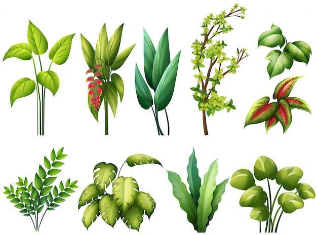 diferentes tipos de plantas descargar vectores premium