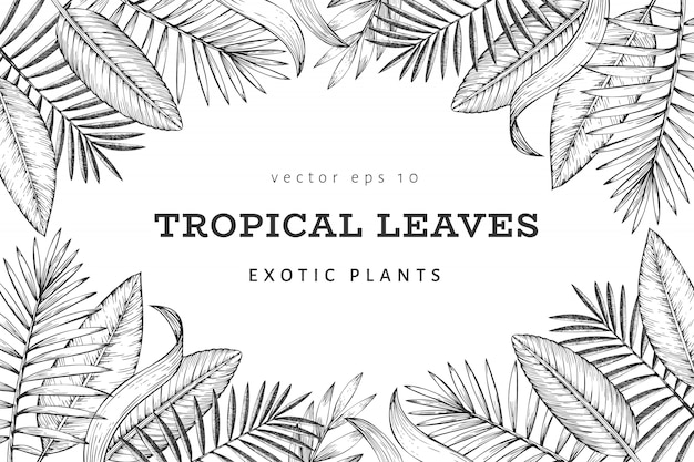 Diseño de banner de plantas tropicales. dibujado a mano ilustración de hojas exóticas de verano tropical. hojas de selva, hojas de palmera grabadas estilo. diseño de fondo vintage Vector Premium