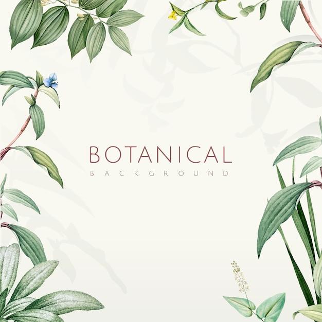 Diseño botánico verde del fondo de las hojas vector gratuito