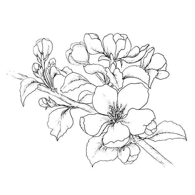 Chinese Flower Line Drawing : Diseño de fondo floral descargar vectores premium