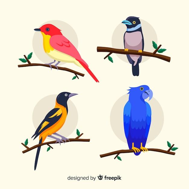 Diseño plano de colección de aves exóticas vector gratuito