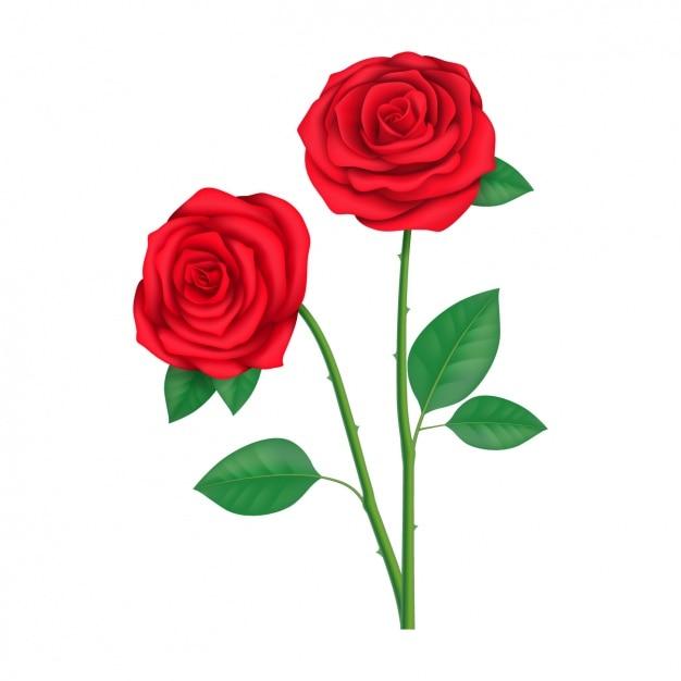 Diseno De Rosas A Color Descargar Vectores Gratis - Diseos-de-rosas