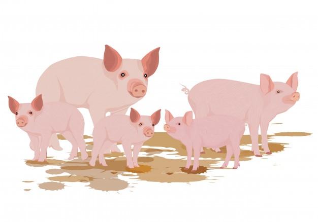 Diseño de vector de cinco cerdos Vector Premium