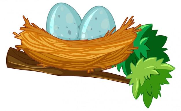 Dos huevos en nido Vector Premium