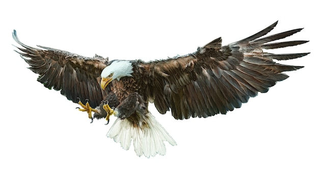 Dorable Dibujo Para Colorear águila Calva Ideas - Páginas Para ...