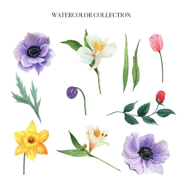 Elemento de diseño conjunto de acuarela de flores vector gratuito