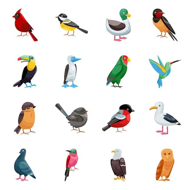 Elementos de dibujos animados de aves silvestres. ilustración aislada de animales salvajes. conjunto de elementos de aves. Vector Premium