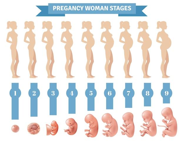 Embarazo mujer etapas vector gratuito