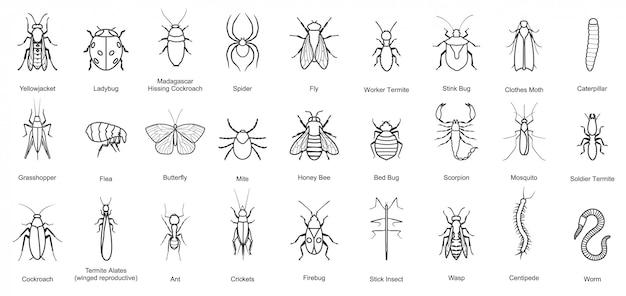 Error de icono de conjunto de línea de insectos. ilustración escarabajo insecto. icono de línea aislada error y mosca escarabajo. Vector Premium