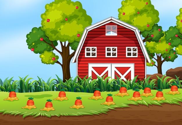 Escena de la granja en la naturaleza con granja de granero y zanahoria Vector Premium