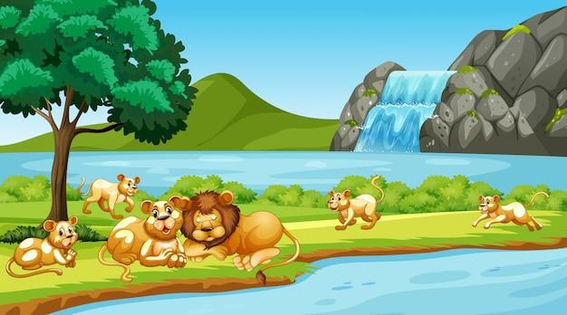 Escena con leones en el parque vector gratuito
