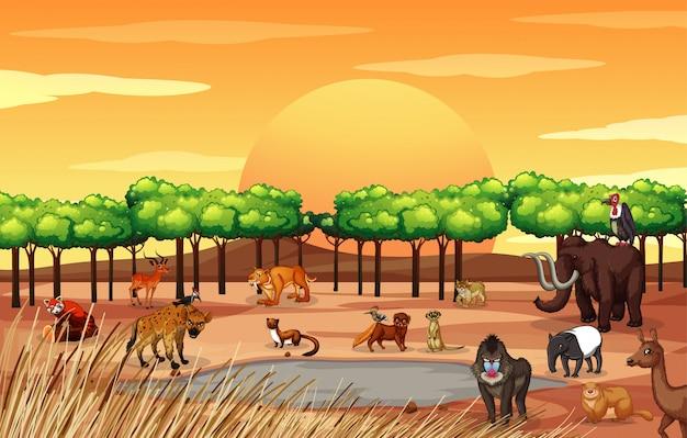 Escena con muchos animales en el campo. Vector Premium