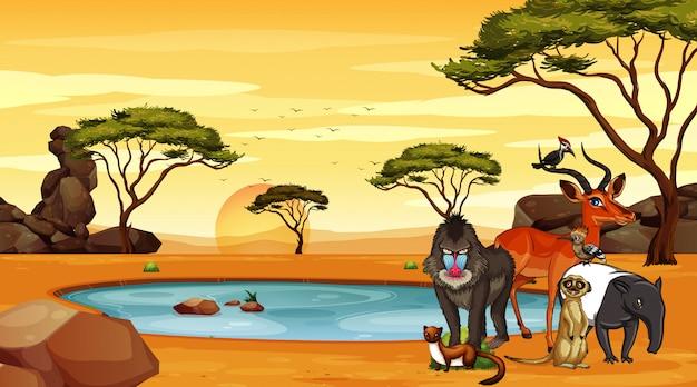 Escena con muchos animales en la ilustración de la sabana vector gratuito