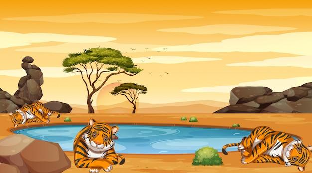 Escena con muchos tigres en el campo. vector gratuito