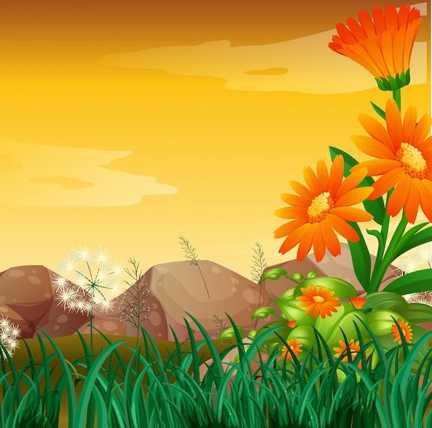 Escena de la naturaleza con jardín de flores al atardecer vector gratuito
