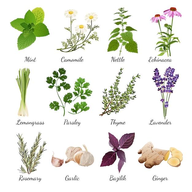 Especias y flores de pradera conjunto de hierbas vector gratuito