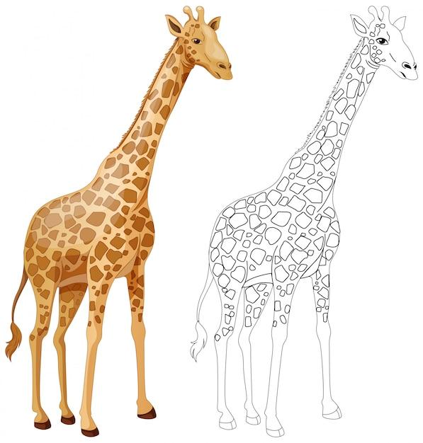 Esquema animal para jirafa vector gratuito