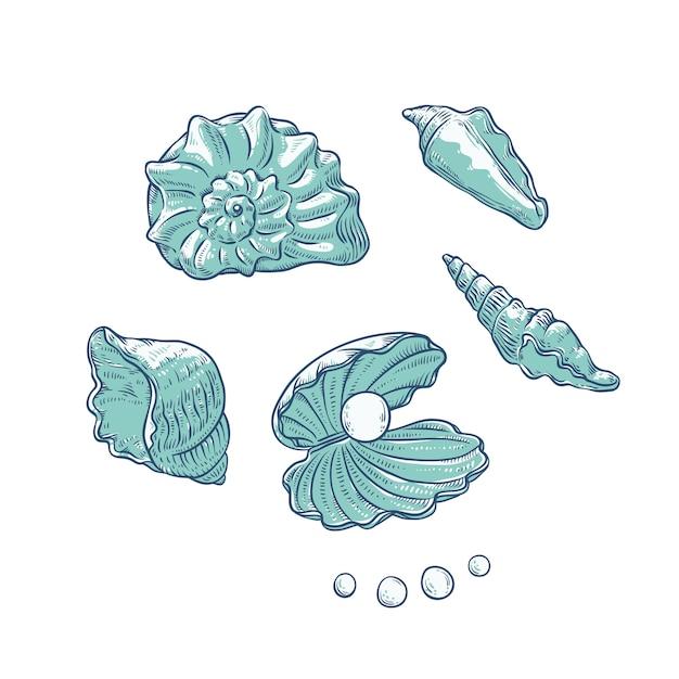 Establecer conchas marinas y perlas de diferentes formas. esquema monocromo de conchas de almeja dibujo ilustración de logotipos de tarjetas turísticas sobre tema marino. Vector Premium