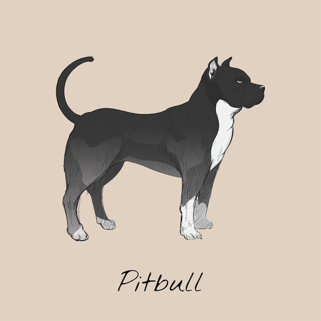 Pitbull Fotos Y Vectores Gratis