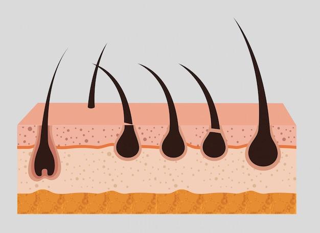 Estructura de la piel en capas vector gratuito