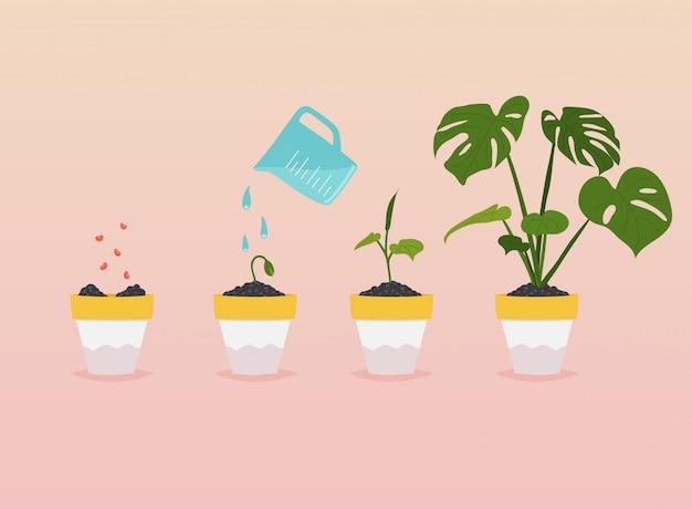 Etapas de crecimiento de la planta. cronología infografía de plantar árboles. Vector Premium