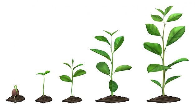 Etapas realistas de crecimiento de las plantas. semilla joven que crece en la tierra, plantas verdes en el suelo, etapa floreciente del brote de primavera, conjunto de la ilustración. cronología de germinación, proceso de plántulas de jardín Vector Premium