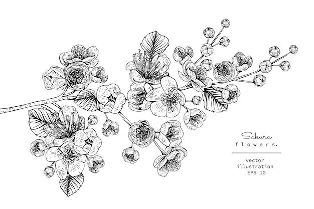 Dibujo De Flor De Cerezo Para Colorear: Flor De Cerezo Sakura Dibujos De Flores