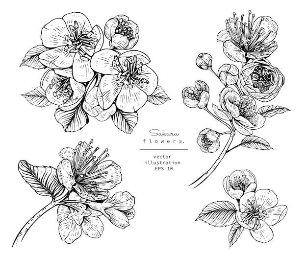 Flor De Cerezo Sakura Dibujos De Flores Descargar Vectores Premium