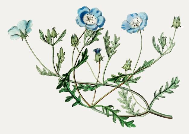Flor de ojos azul celeste vector gratuito
