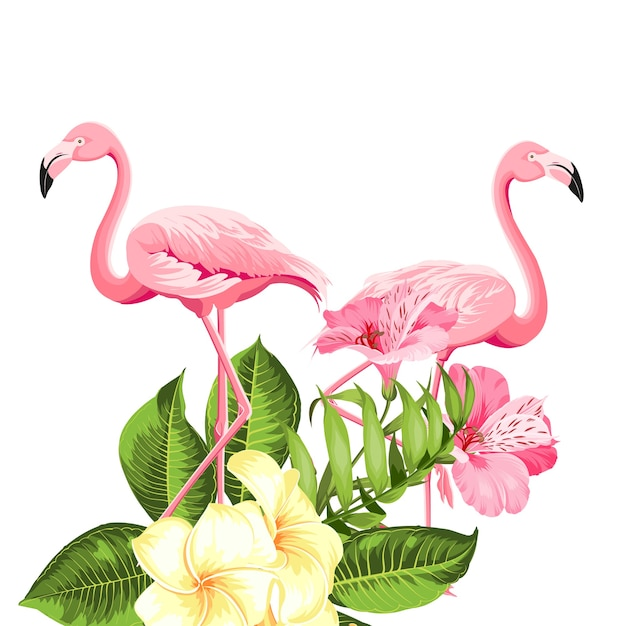 Flor tropical y flamencos sobre fondo blanco. ilustración vectorial vector gratuito