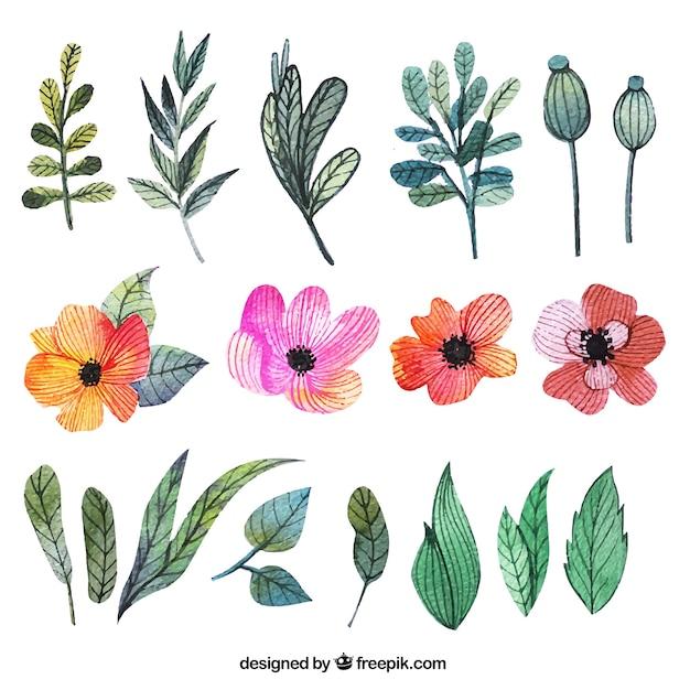 Flores De Acuarela Y Hojas Descargar Vectores Gratis