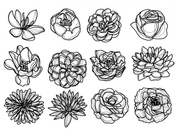 Flores dibujo a mano y boceto en blanco y negro Vector Premium