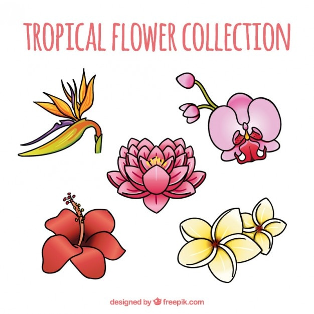 Flores Exoticas Y Bonitas Dibujadas A Mano Descargar Vectores Gratis
