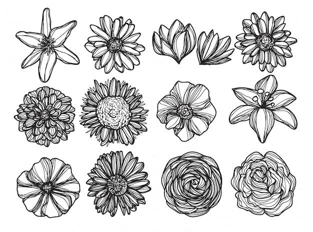 Flores A Mano Dibujo Y Croquis En Blanco Y Negro Vector