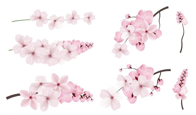 Flores de sakura rosa oscuro y claro. Vector Premium