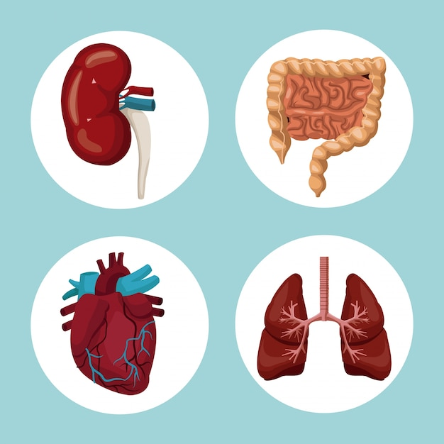 Fondo de color con marcos circulares de órganos del cuerpo humano ...
