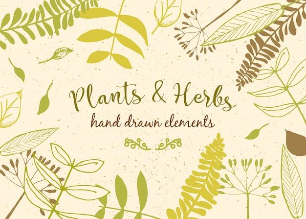 Fondo floral invitación de la vendimia con varias hojas. ilustración botánica vector gratuito