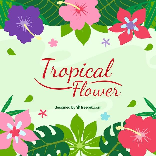 Fondo De Flores Tropicales De Colores