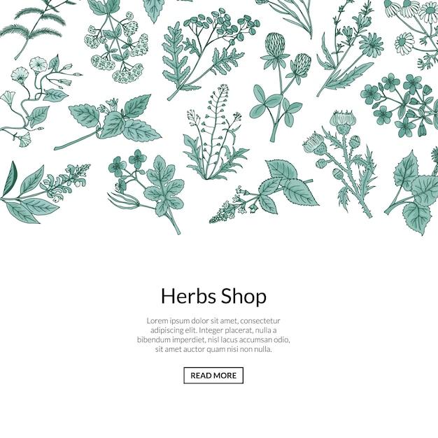 Fondo de hierbas medicinales dibujadas a mano con lugar