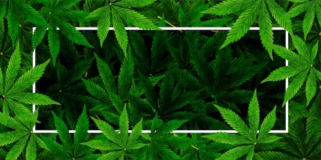 Fondo de hoja de marihuana o cannabis. ilustración realista de la planta en vista superior. Vector Premium