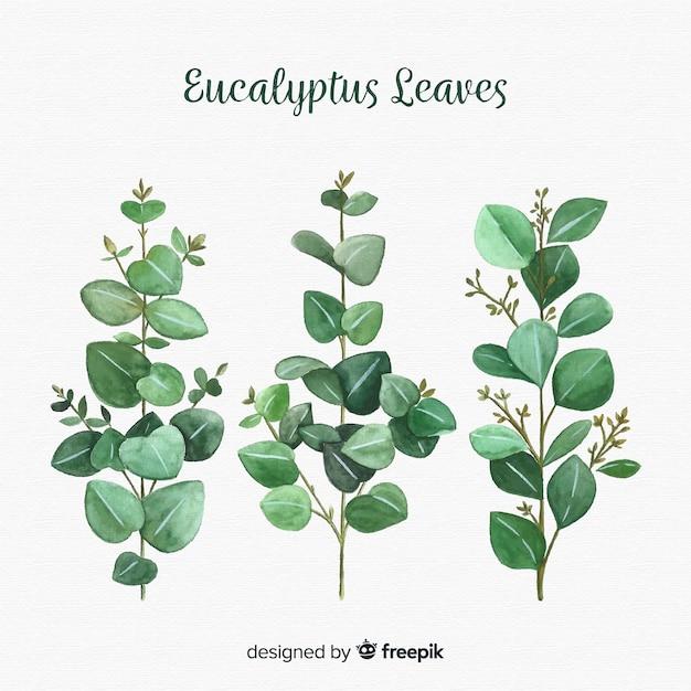 Fondo hojas de eucalipto dibujadas a mano vector gratuito