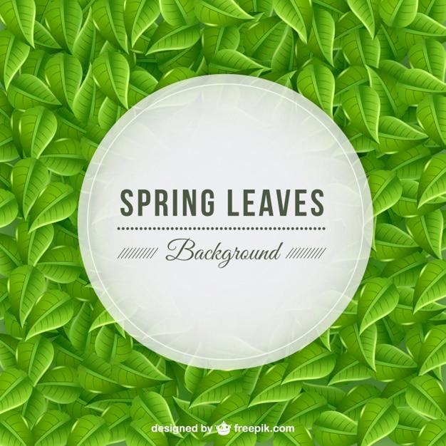 Fondo de hojas primaverales vector gratuito