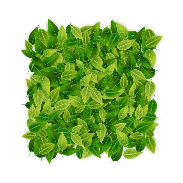 Fondo de hojas verdes Vector Premium
