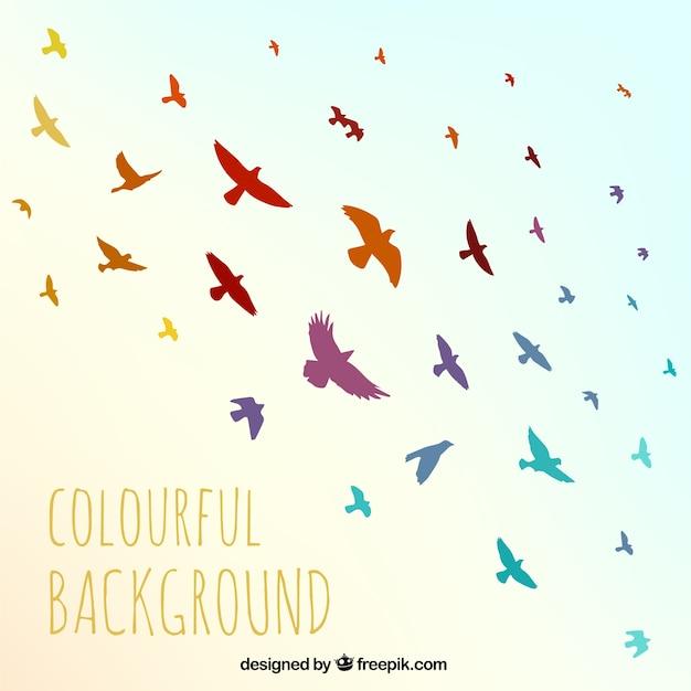Fondos de pajaros coloridos