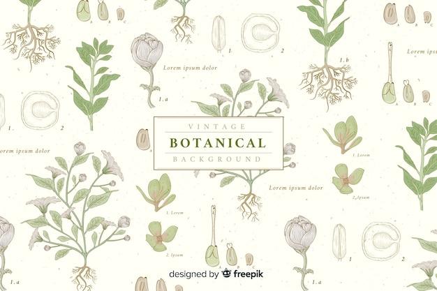 Fondo retro de botánica vector gratuito