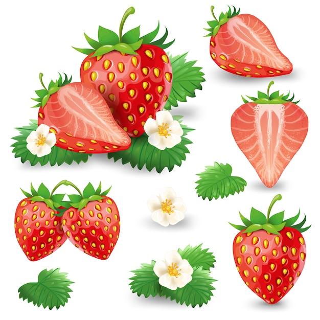 Fresa madura con hojas y conjunto de vectores de flor vector gratuito