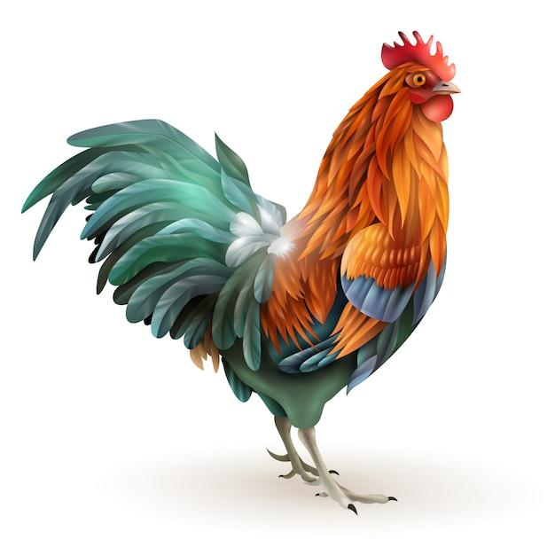 Gallo de gallo rojo vista lateral resumen vector gratuito