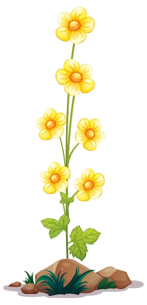 Girasoles en un tallo largo Vector Premium