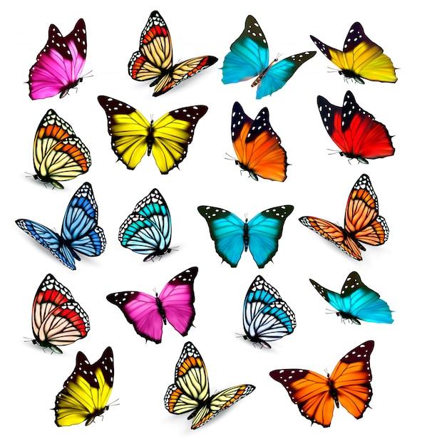 Gran colección de coloridas mariposas. vector Vector Premium
